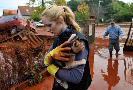 hungary-chemical-flood-cat_27246_big.jpg